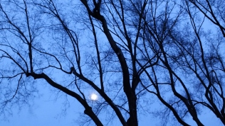 Watching the moon dance between the tree branches.