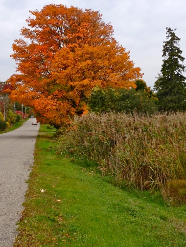 A beautiful drive in the autumn in Collingwood area, Ontario