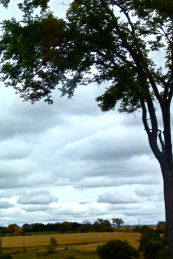 I love the solace of this tree against the darkening sky