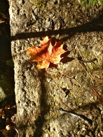 This is one of my favourite shots. Love the shadows over the brilliance of the autumn leaf.