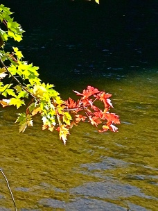 I love this shot of the crisp autumn leaves against the brook