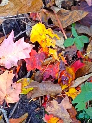 Beautiful, beautiful autumn