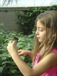 butterflyconservatory010